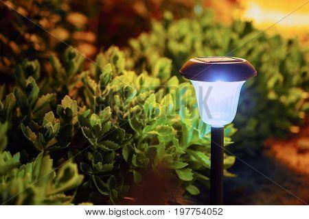 Decorative Small Garden Light, Lanterns In Flower Bed. Solar Powered Lamp