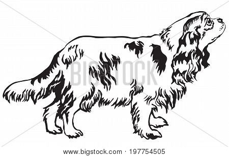 Decorative portrait of standing in profile dog Cavalier King Charles Spaniel vector isolated illustration in black color on white background