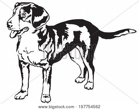 Decorative portrait of standing in profile Entlebucher Mountain Dog vector isolated illustration in black color on white background