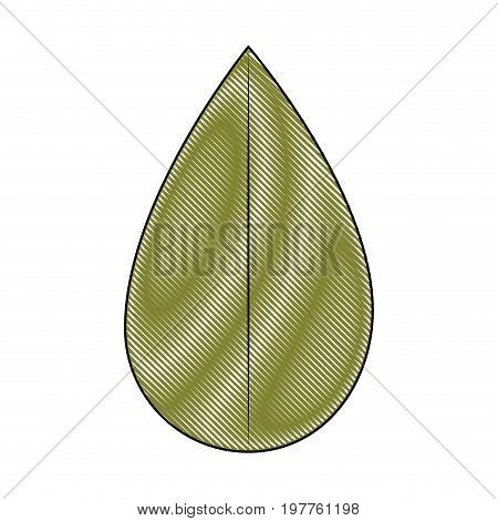 white background of colored crayon silhouette of ovoid leaf vector illustration