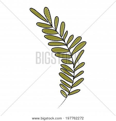 white background of colored crayon silhouette of long branch with leaves oval vector illustration