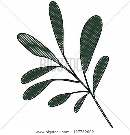 white background of colored crayon silhouette of branch with oval leaves vector illustration