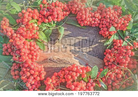 Red Rowan Wreath. Ripe Red Rowan. Top View