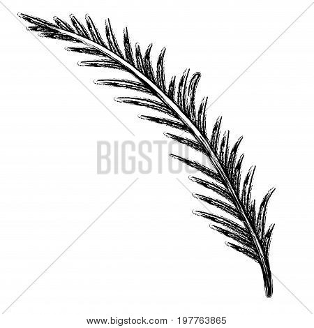 monochrome blurred silhouette of branch with linear leaves vector illustration