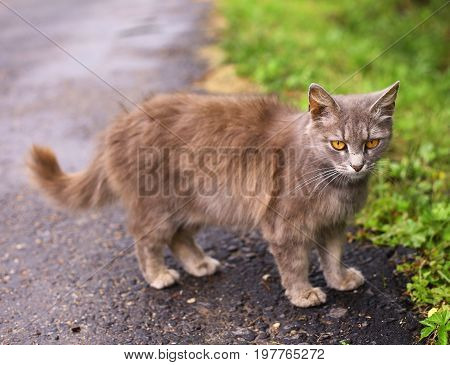 stray she cat close up photo on outdoor summer background