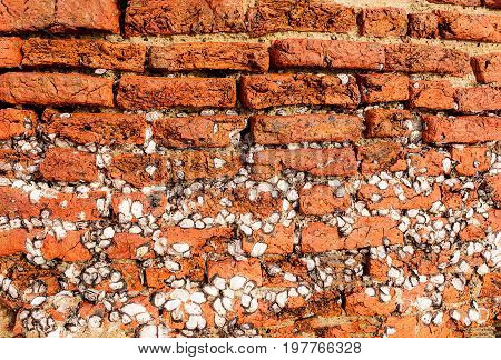 Old vintage brick wall with a lot of barnacles attaches permanently on surfaces