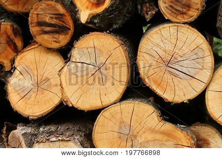 Cross sections of cherry fire wood. Stack. Closeup