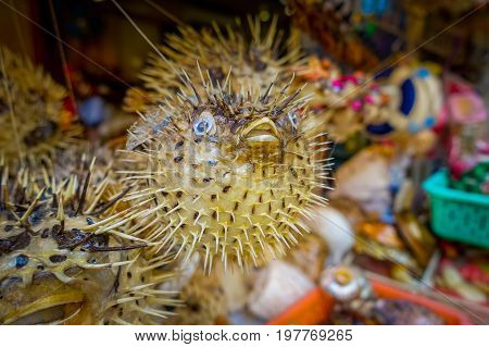 Dried fugu made by local people, in a market in hong kong.