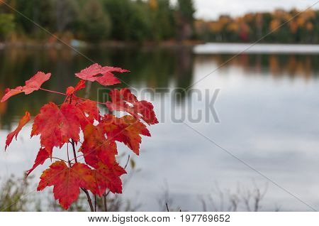 Maple leaves against blurred lake on background. Autumn colors on lake Ontario Canada.