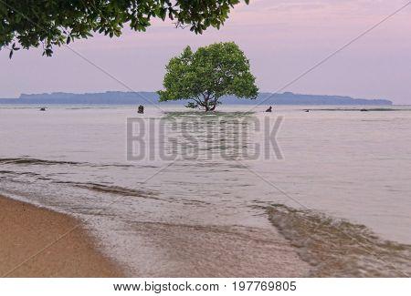 A single tree reflected in the shallow water clings to a coral rock reef - Espiritu Santo, Vanuatu