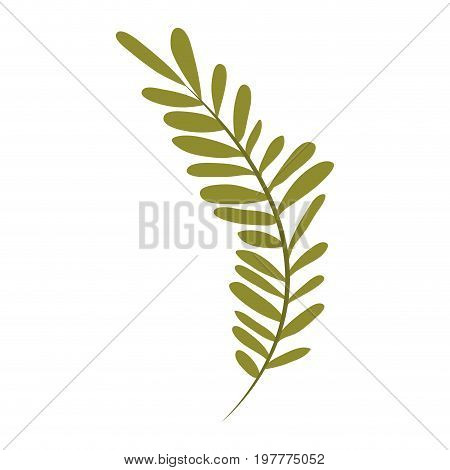 white background with colorful silhouette of long branch with leaves oval vector illustration