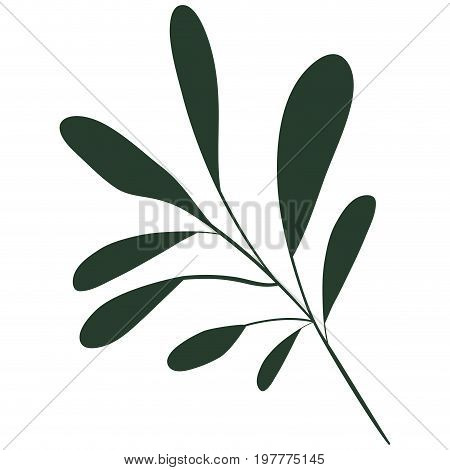 white background with colorful silhouette of branch with oval leaves vector illustration