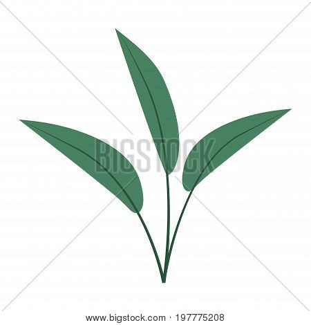 white background with colorful silhouette of leaves lanceolate vector illustration
