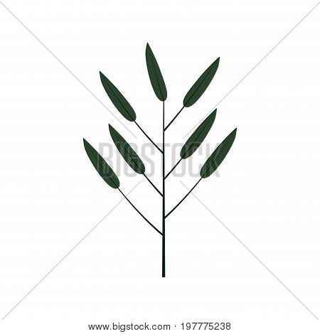 white background with colorful silhouette of branch with leaves lanceolate vector illustration
