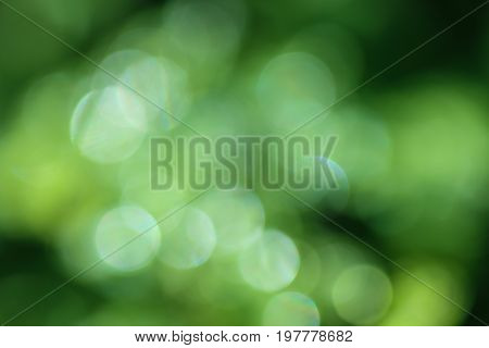 Green bokeh background of water drops on leaves