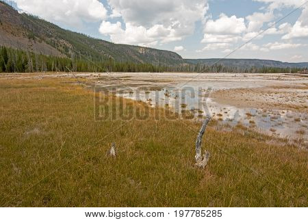 Dead Tree Stump In Black Sand Geyser Basin In Yellowstone National Park In Wyoming Usa