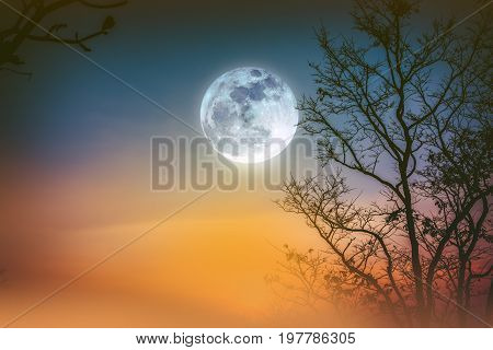 Night landscape of colorful sky foggy is swinging between silhouette of dry tree and bright full moon. Serenity nature background. Outdoor at nighttime.