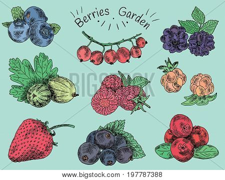 berries garden, blackberries, boysenberry, currants, dewberry, gooseberries, mulberry, raspberry, strawberry, mountain ash, blueberry, cloud berry