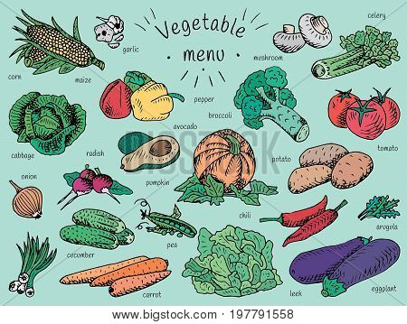 Vegan food, vegetable menu, garlic, mushroom, tomato, arugula, cucumber, pepper,  corn, carrot, potato, broccoli, avocado, radish, chili, pumpkin, eggplant, celery, onion, maize, cabbage, leek, pea