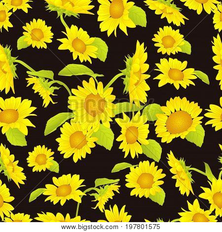 beautiful yellow sunflower background pattern, yellow sunflower