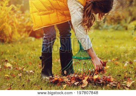 happy child girl playing little gardener in autumn and picking leaves into basket. Seasonal garden work. Backyard cleaning. poster