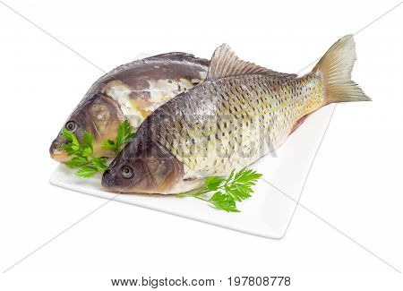 Common carp and mirror carp with peeled scales and prepared for cooking and parsley twigs on the white square dish on a white background