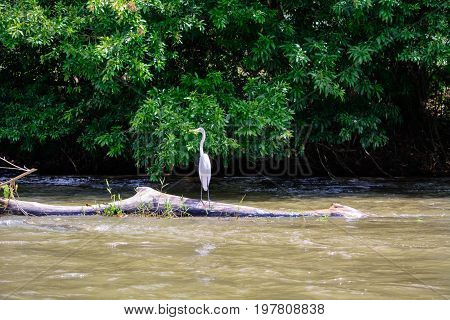 A view of a white Egret perched on a log