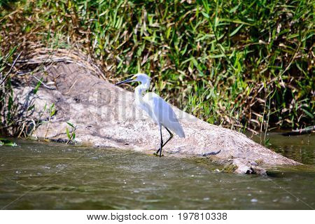 A view of a white Egret perched on the shore of the San Juan rve
