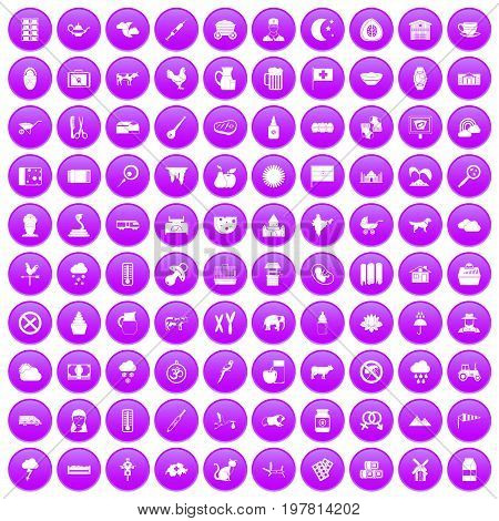 100 cow icons set in purple circle isolated vector illustration