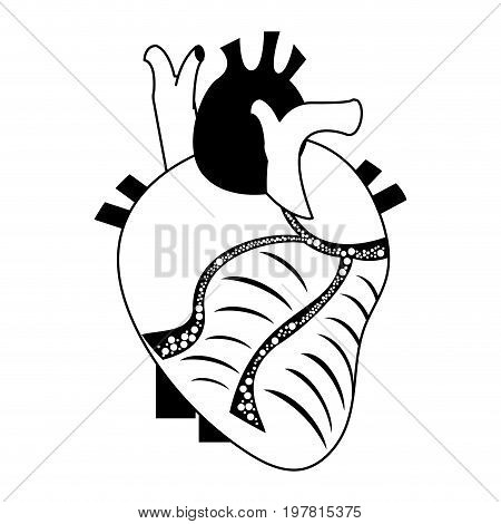 human heart icon image vector illustration design  black and white