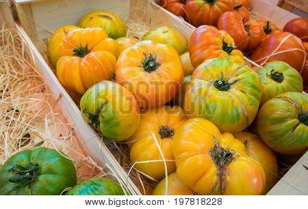 Assortment Of Different Organic Fresh Tomatoes