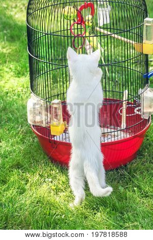 White little cat about bird in cage on green grass