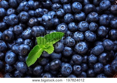 Close-up of delicious and juicy blueberries with mint used as a background. Top view of tasteful, raw and ripe blueberries full of vitamins. Organic ingredients for nutritious summer desserts.