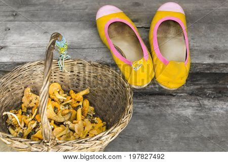 Ladies shoes and a wicker basket with fresh chanterelle selective colour shot with particular focus