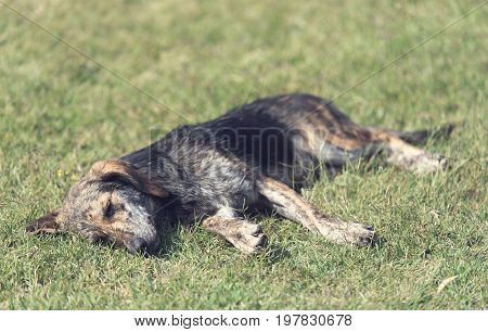 Mongrel Dog Relaxing In The Park