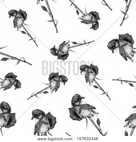 Vector seamless pattern with hybrid tea rose isolated on white background drawn by hand. Graphic drawing pointillism technique. Botanical natural collection. Black and white floral illustration