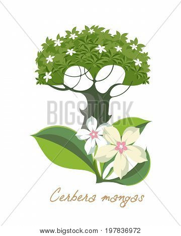 Tropical forest herbs and plants with leaves, flowers. Beautiful cerbera mangas with leaves. Vector illustration isolated on white background.
