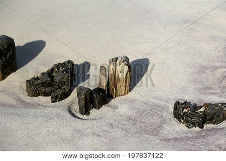 Remains of wooden breakwaters stick out of the sand on the beach on the Baltic coast in Kolobrzeg Poland