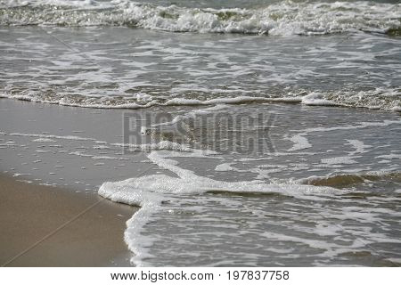 Soft wave of waters of Baltic Sea on sandy beach in Kolobrzeg in Poland. This view creates a seaside background