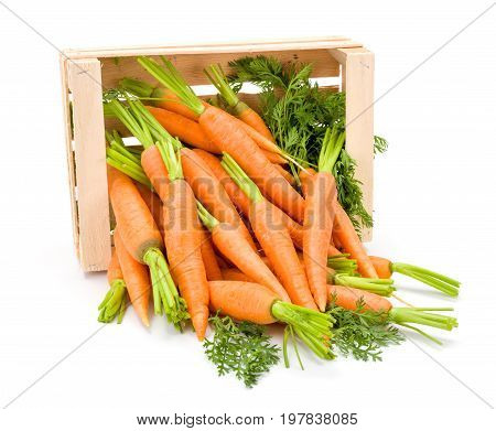 Carrot Roots (daucus Carota Ssp. Sativus) In Wooden Crate