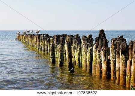 Wooden poles placed in the seabed are placed there to protect the shore against the sinister effects of sea waves. It is seen in Kolobrzeg in Poland