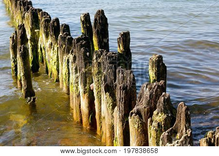 At the beach on the shore of the Baltic Sea wooden poles stick out of the water. This is a breakwater to protect the coast from the action of sea waves in Kolobrzeg in Poland