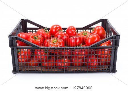 Tomatoes (solanum Lycopersicum) In Plastic Crate