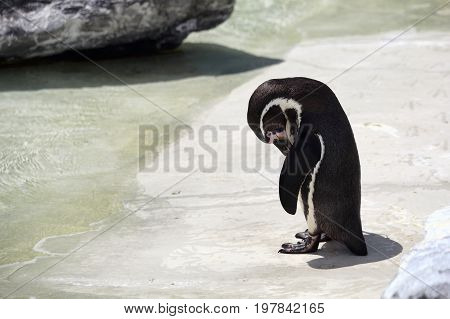 Penguin looking sad rejected and very lonely