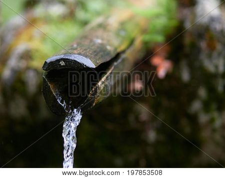 mountain river flowing in the forest, pure potable water