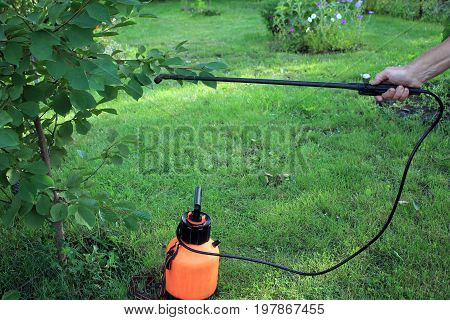 Gardener sprinkles cherry tree from pests and diseases with hand pump sprayer.