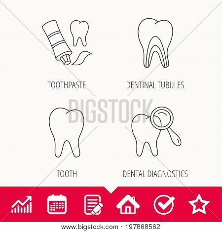 Tooth, dental diagnostics and toothpaste icons. Dentinal tubules linear sign. Edit document, Calendar and Graph chart signs. Star, Check and House web icons. Vector