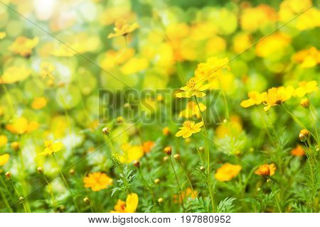 Abstract blurred flowers nature background with soft focus