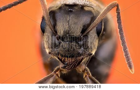 Detail of head of ant on orange background macro or micro photography