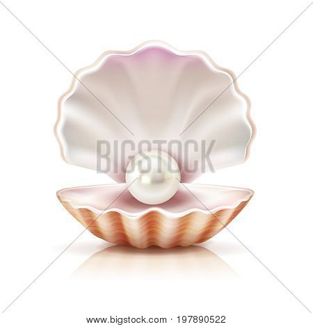 Mother of pearl shining in open shell of freshwater or seashell mollusk closeup realistic image vector illustration